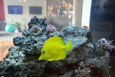 Google Fish