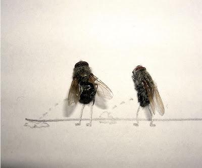 Afinal as moscas sao uteis depois de mortas Image007