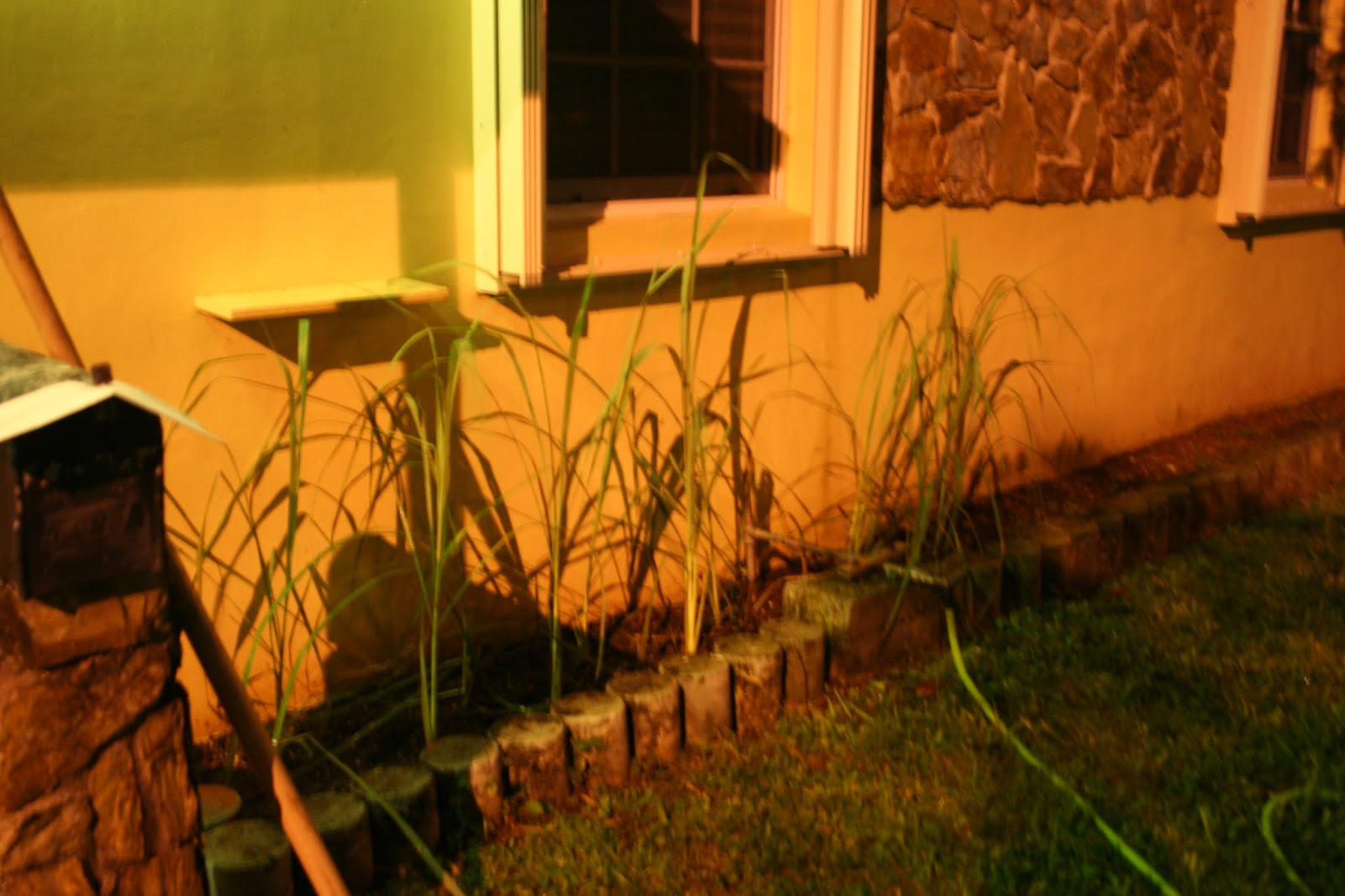 Midnight Permaculture: How a suburban home becomes an urban ...