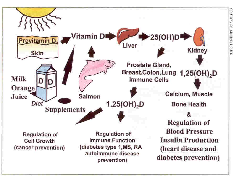 Link Found between Vitamin D Deficiency and Dementia