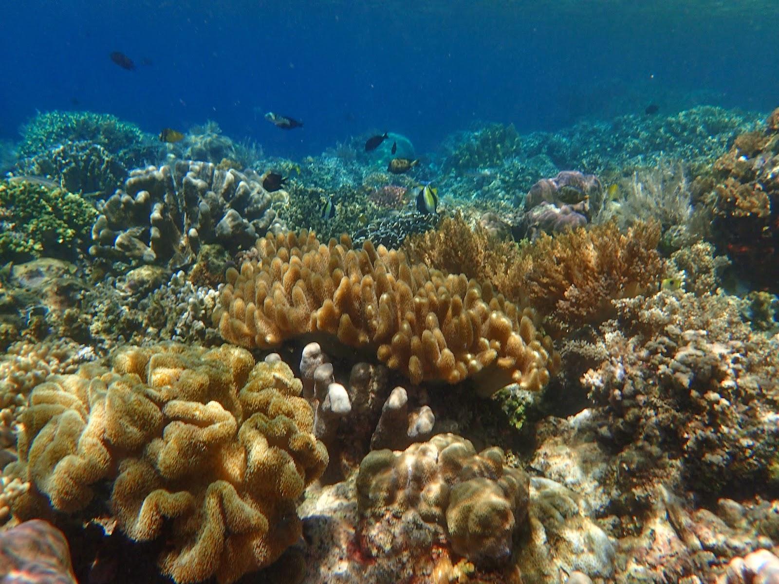 Carl Fakaruddin Foto Minggu Ini Keindahan Bawah Laut Taman