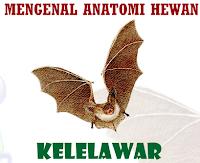 e-Learning Anatomi Kelelewar