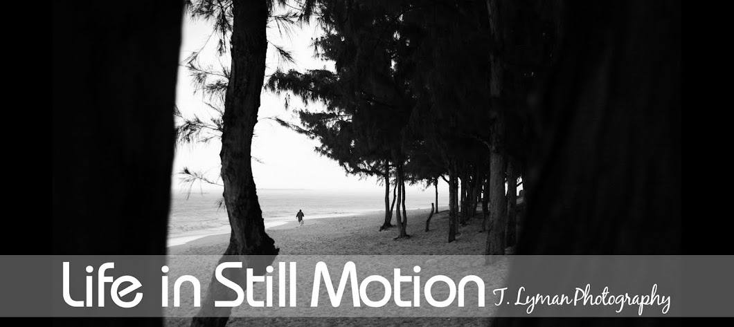 Life in Still Motion