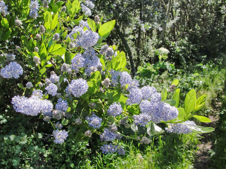 10 arbustos con flor para el jard n amigos de la jardiner a - Arbusto pequeno con flores ...