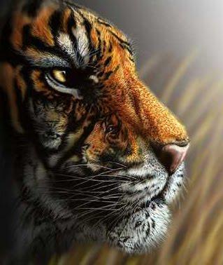 Thinking Tiger D20