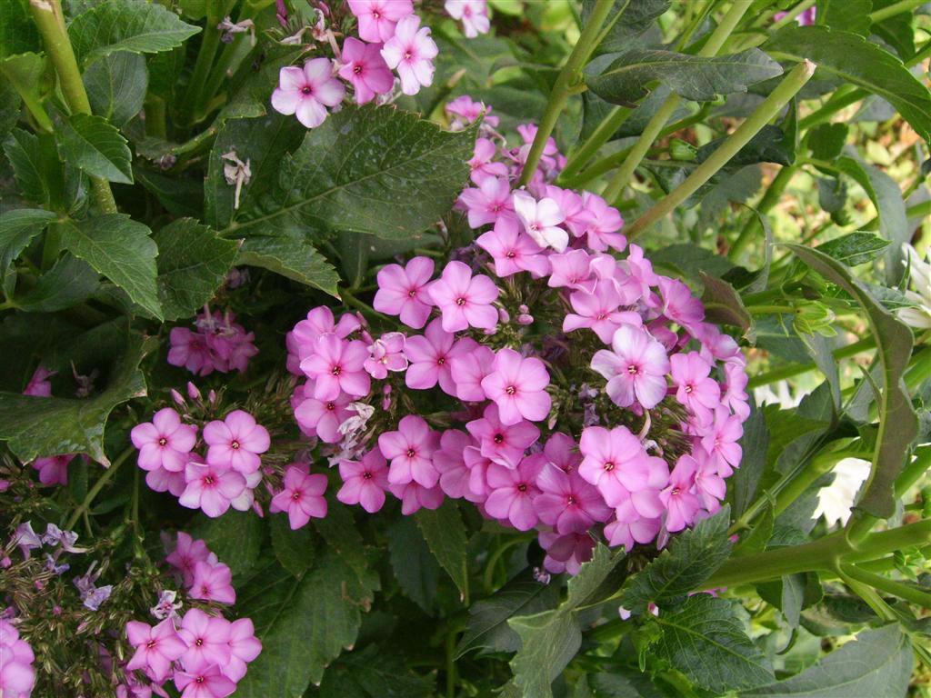 http://2.bp.blogspot.com/-PN820tKItNQ/T3NHrbVzvTI/AAAAAAAAKQQ/1j9UdPDnU88/s1600/Prekrasno-proljetno-cvijece-download-besplatne-pozadine-za-desktop-1024-x-768-slike-priroda-proljece.jpg