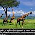 P-85 El naturalista, en cuyo libro Filosofía zoológica presentó la primera teoría de la evolución...