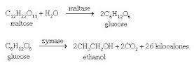 reaksi etanol secara zymase