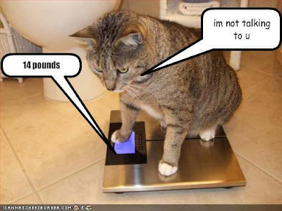 cat on talking weigh scale
