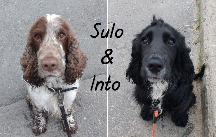 Sulo & Into