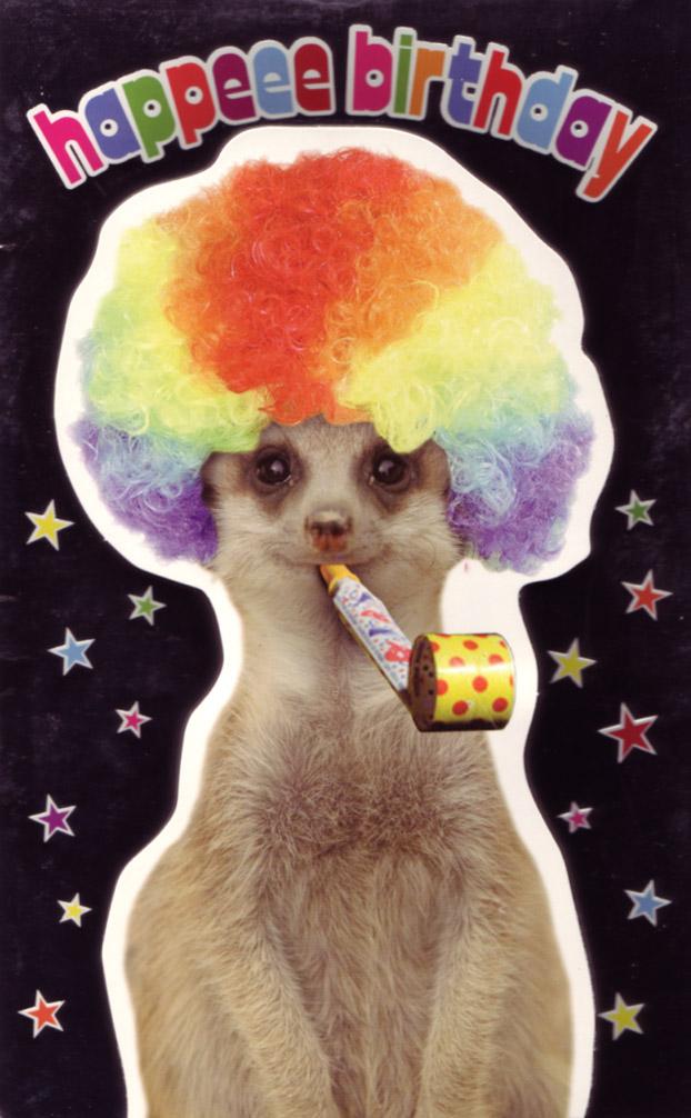 Wacky Meerkat Fun Bad Birthday Cards