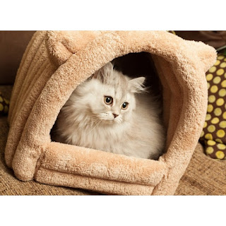 Picture Of A Cat Hiding In Igloo
