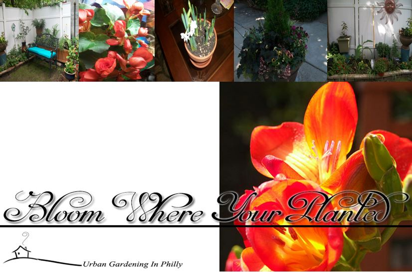 Bloom Where You're Planted-Urban Gardening in Philly