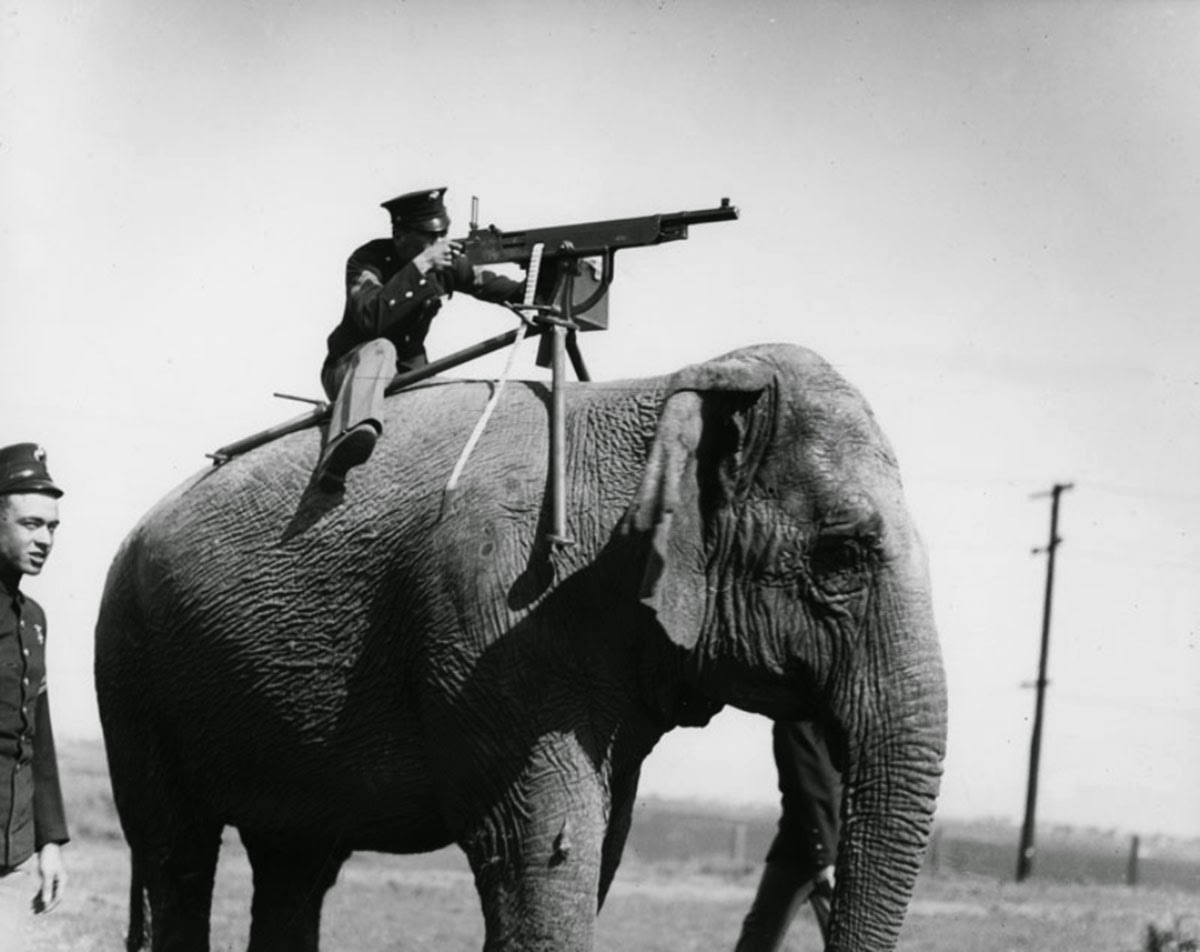The elephant would not respond well to the sound of that machine gun a few inches from his ears.