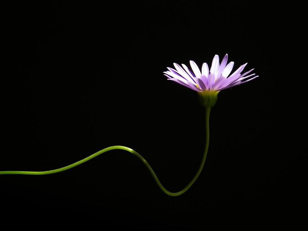 Imagensnet papel de parede flores - Papel de pared blanco y negro ...