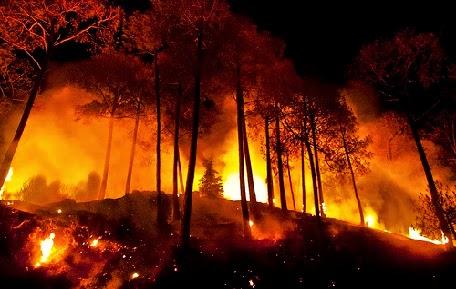 Mengatasi Kebakaran Hutan di Sekeliling Kita