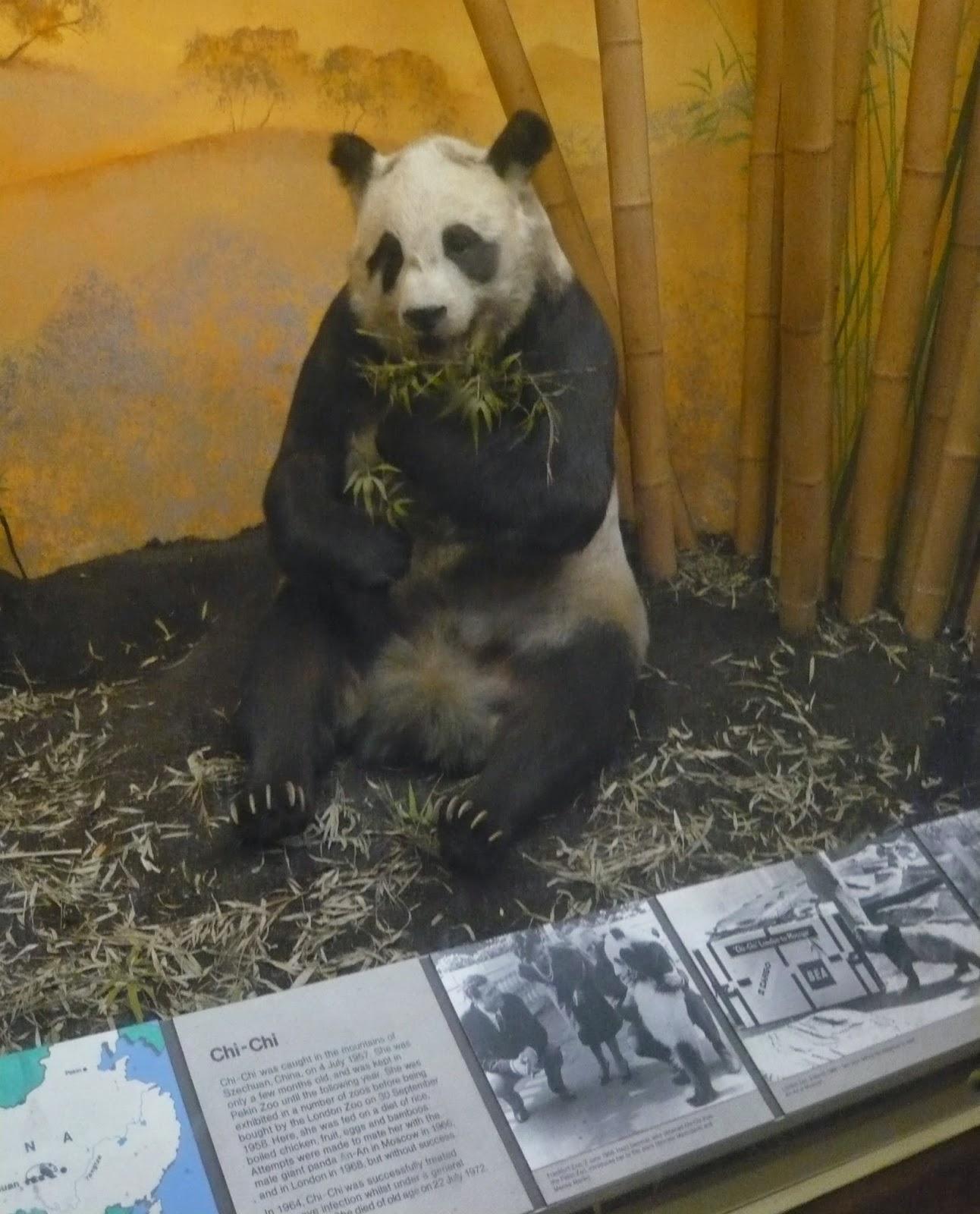 Chi Chi Panda Natural History Museum