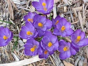 Plantas y flores plantas especies jardiner a tareas de - Tareas de jardineria ...