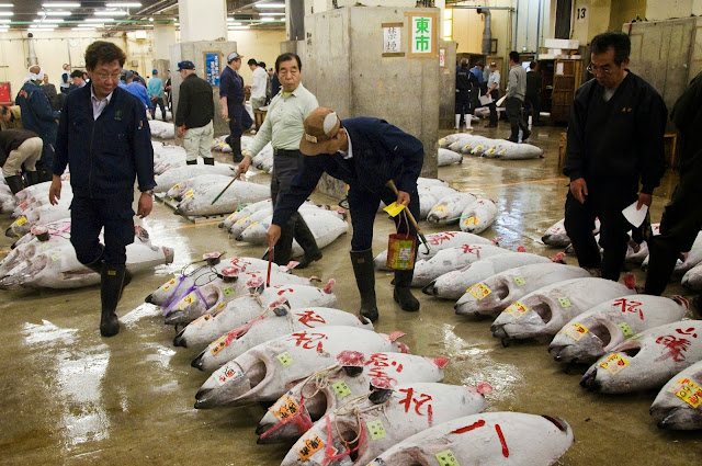 HOUR 05:00. Jason Pemberton. United Kingdom. Tuna at Tsukiji fish market