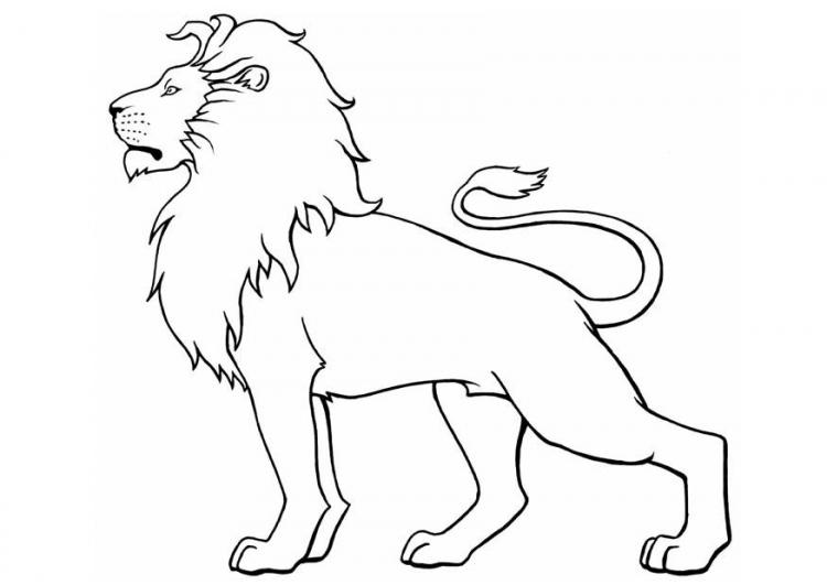 Dibujos para colorear: Dibujos de leones para colorear