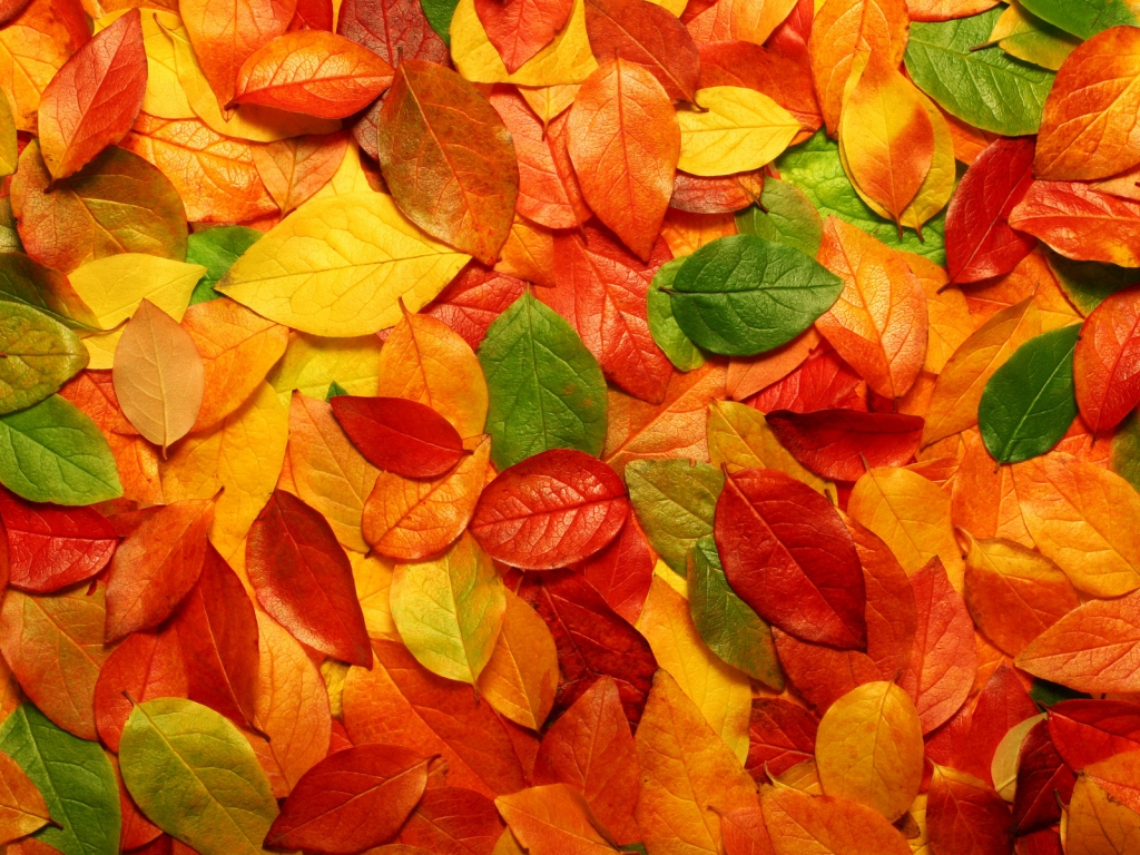 Autumn Season Standard Resolution Wallpaper 17