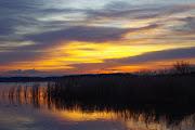北印旛沼 吉高近辺。7時が近づき、明るくなってくると、黄金色が立って来ました .