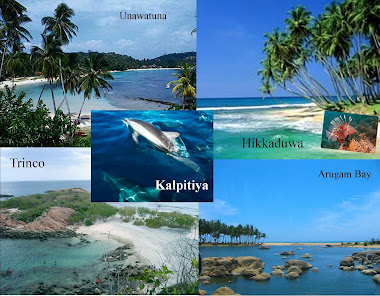 Golden Beaches