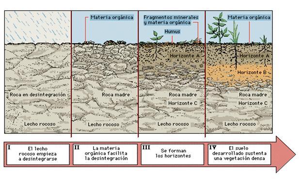Aulabiogeotoni 2 ctm el suelo for Proceso de formacion del suelo