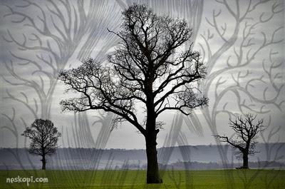 tiga batang pokok