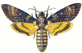 ВРЕДИТЕЛИ И ХИЩНИКИ ПЧЕЛ - Бабочка мертвая голова