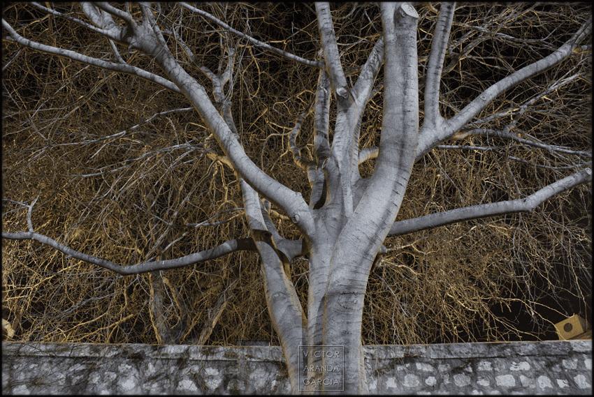 fotografía, naturaleza, Valencia, arbol, ramas, noche, serie