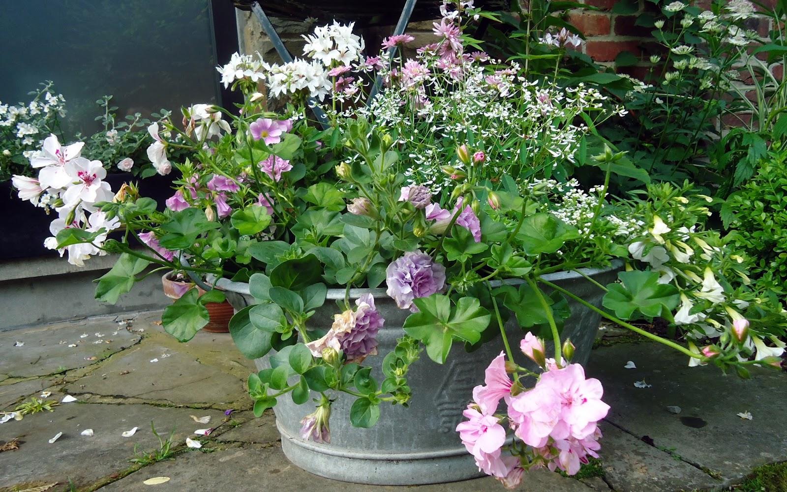 Fleurs retombantes jardinieres les - Fleur de jardiniere ...
