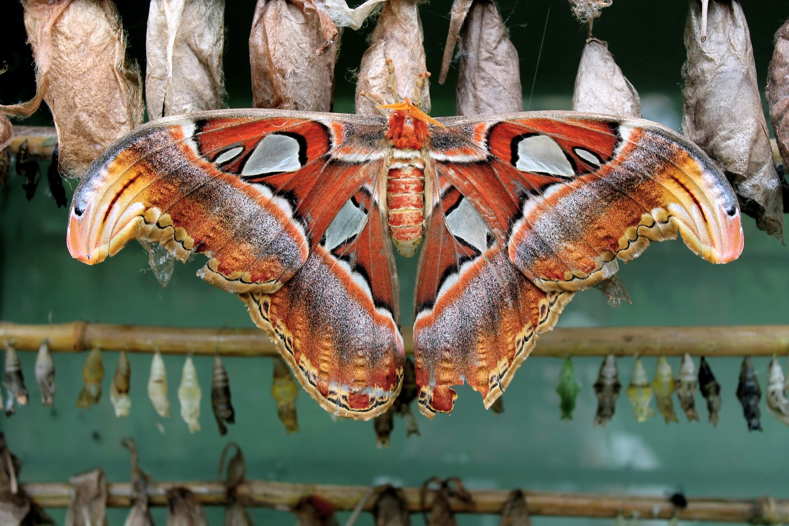 uk moth blog