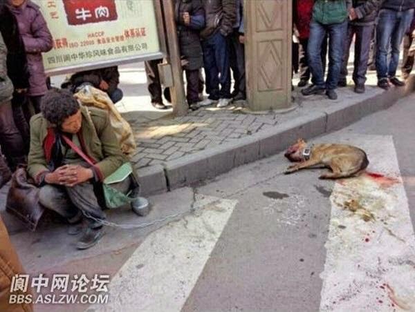 Kisah Seekor Anjing Yang Dipukuli Polisi Sampai Mati