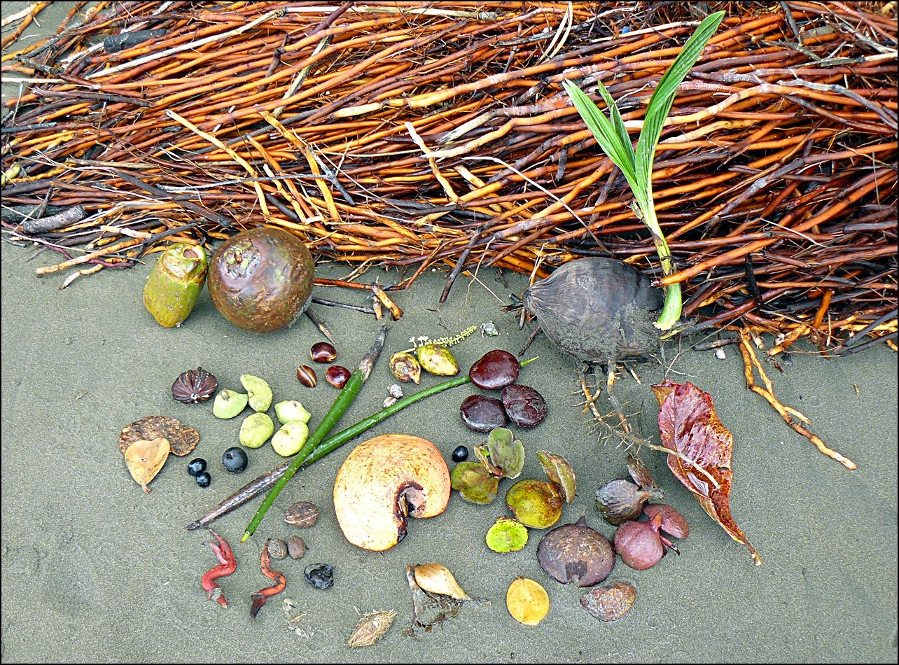 Collection of about a dozen different seeds on one Costa Rica beach
