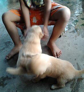 ลูกเล่นกับน้องหมา น่ารัก