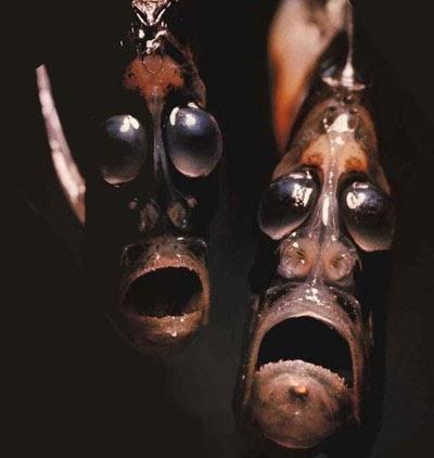 The Hatchetfish