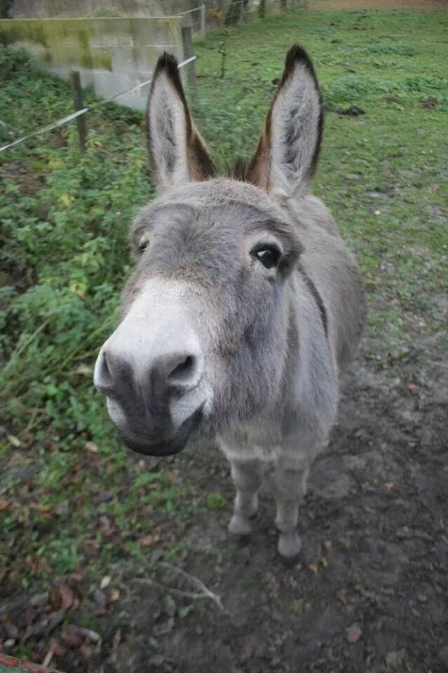 Funny animals of the week - 28 March 2014 (40 pics), cute donkey