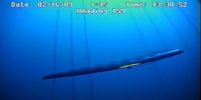Ikan dayung raksasa (Regalecus glesne) tertangkap kamera. | Marc C ...