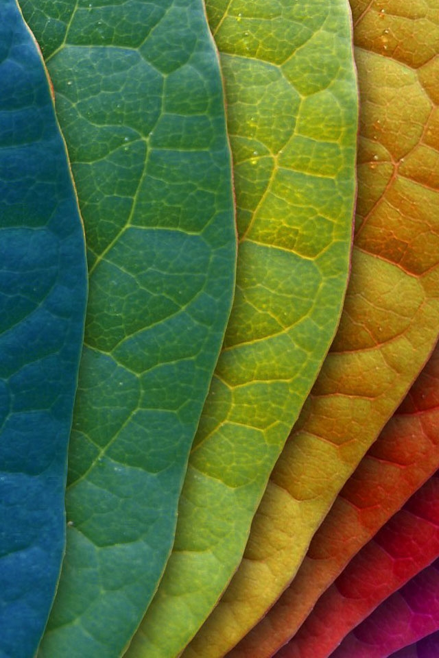 Colorful Leaves iPhone 4 Wallpaper