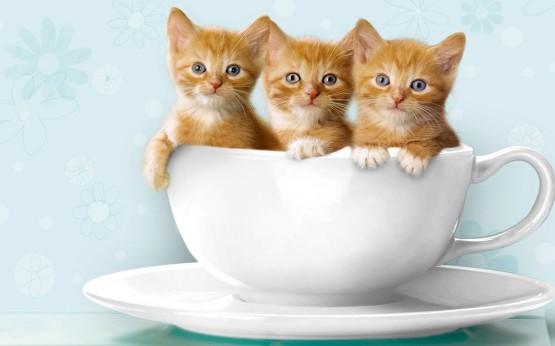 Foto Kucing Lucu Imut dan Menggemaskan 21
