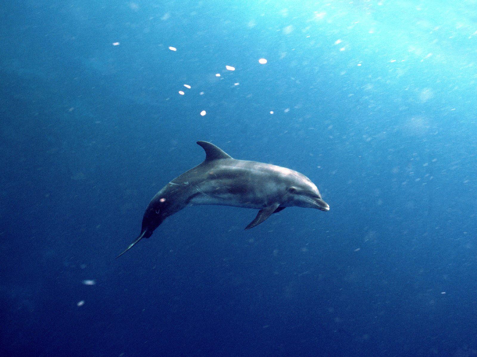 http://2.bp.blogspot.com/-PSZ-B_KePUo/Tg29EsIyuPI/AAAAAAAAA9o/qiAmLcToDVg/s1600/Underwater%2BWallpaper%2B%25252836%252529.jpg