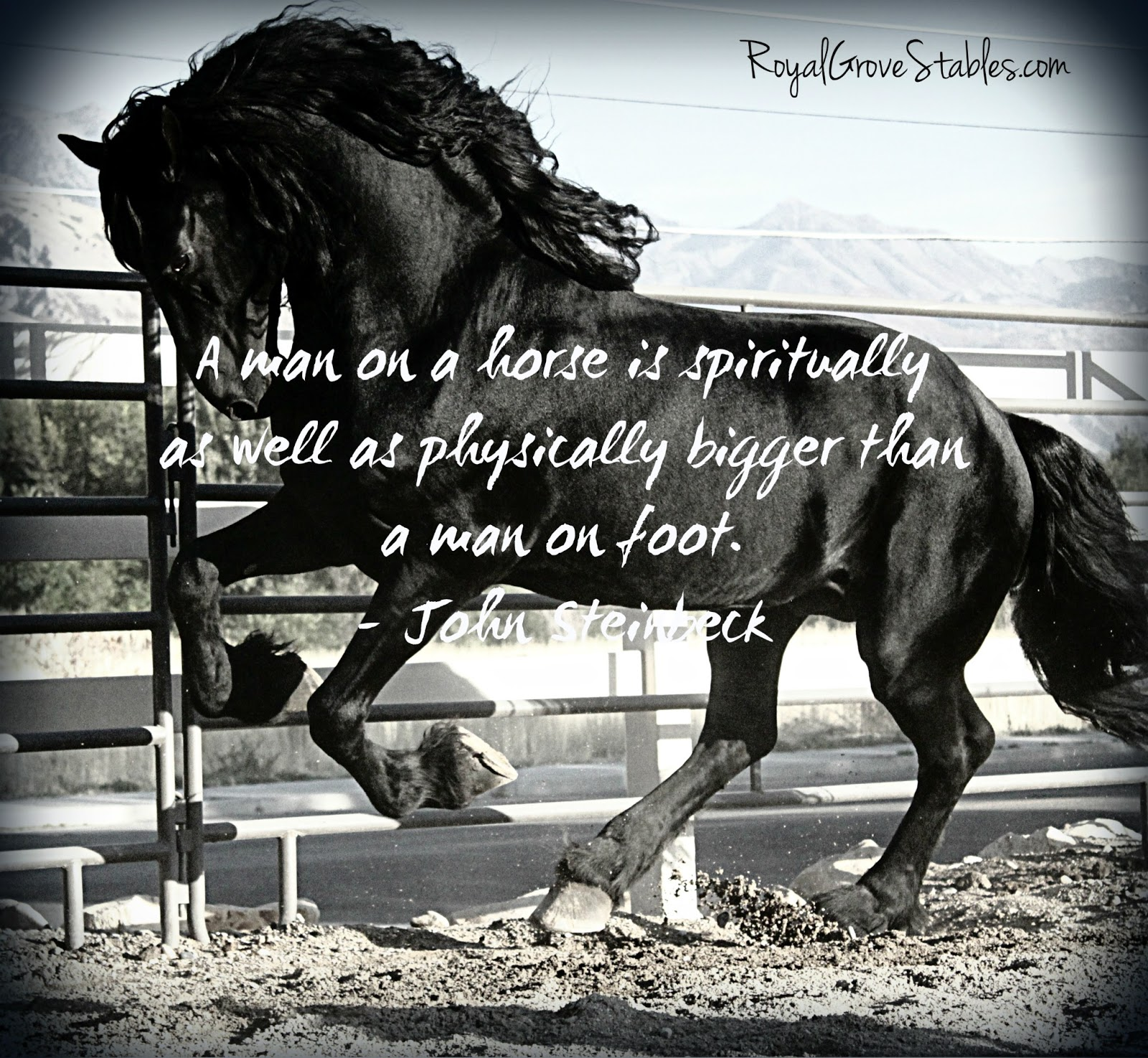 Inspirational Horse Quotes and Sayings