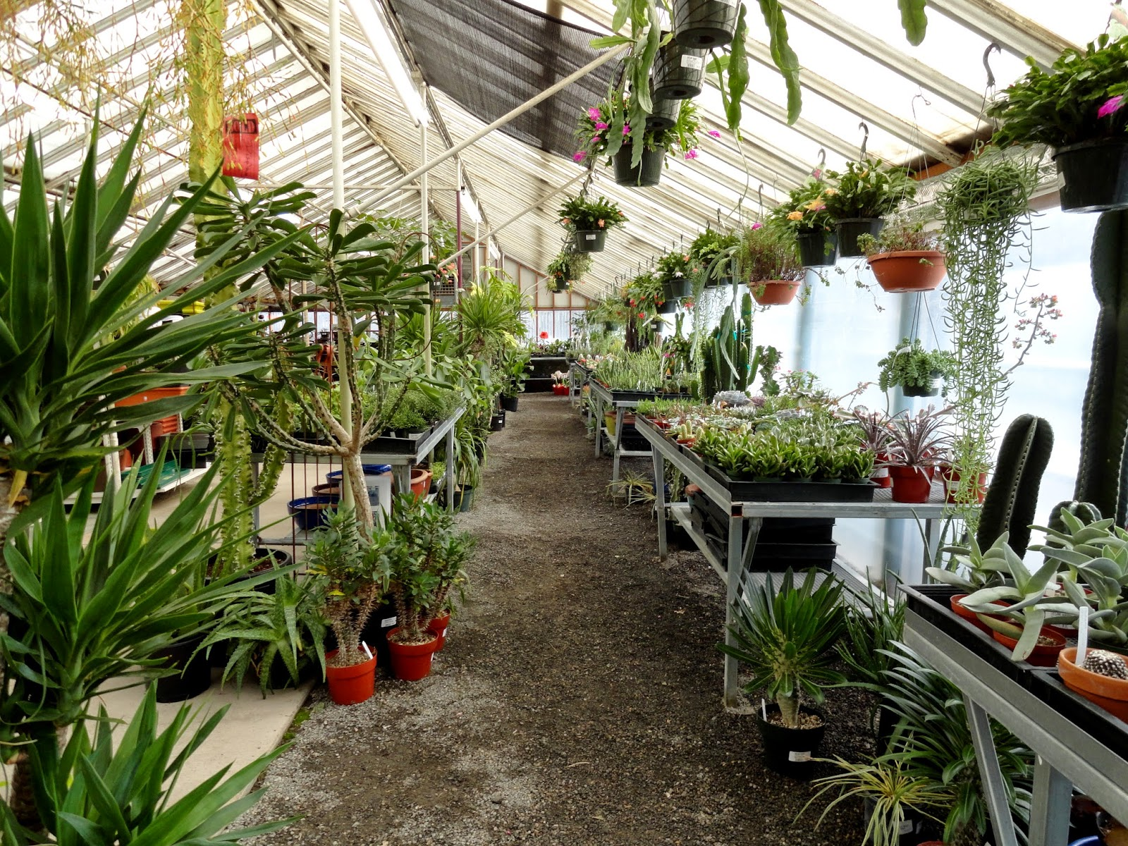 Visit Is To Portland Nursery And Timely Too Because This Coming Thursday January 15th The Beginning Of Their Annual Houseplant Pottery