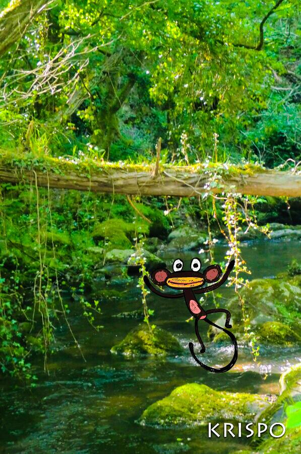 dibujo de mono en fotografía de lianas en hondarribia
