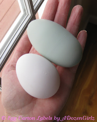 This double yolked egg was laid by my Easter Egger, Esther.