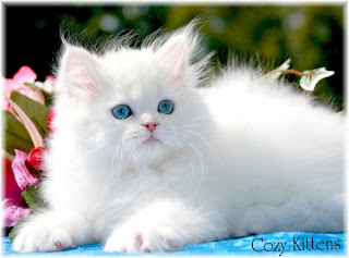 Beautiful Cats Pictures