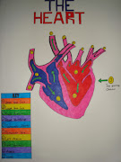 My colourful diagram of the Heart and its parts.