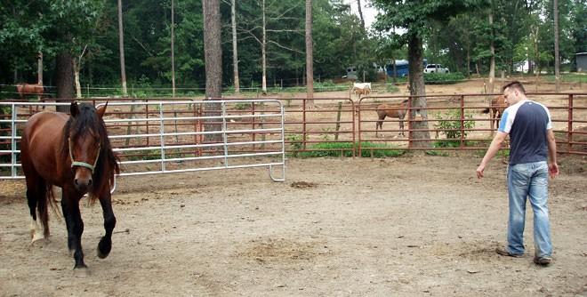 susurrador de caballos trabajando