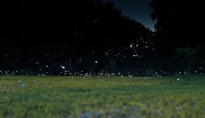 Campo lleno de luciérnagas.
